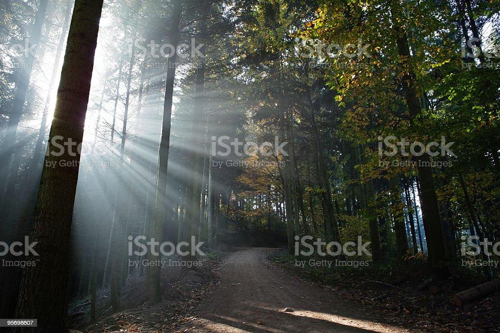 Wald mit Sonnenstrahlen – Foto