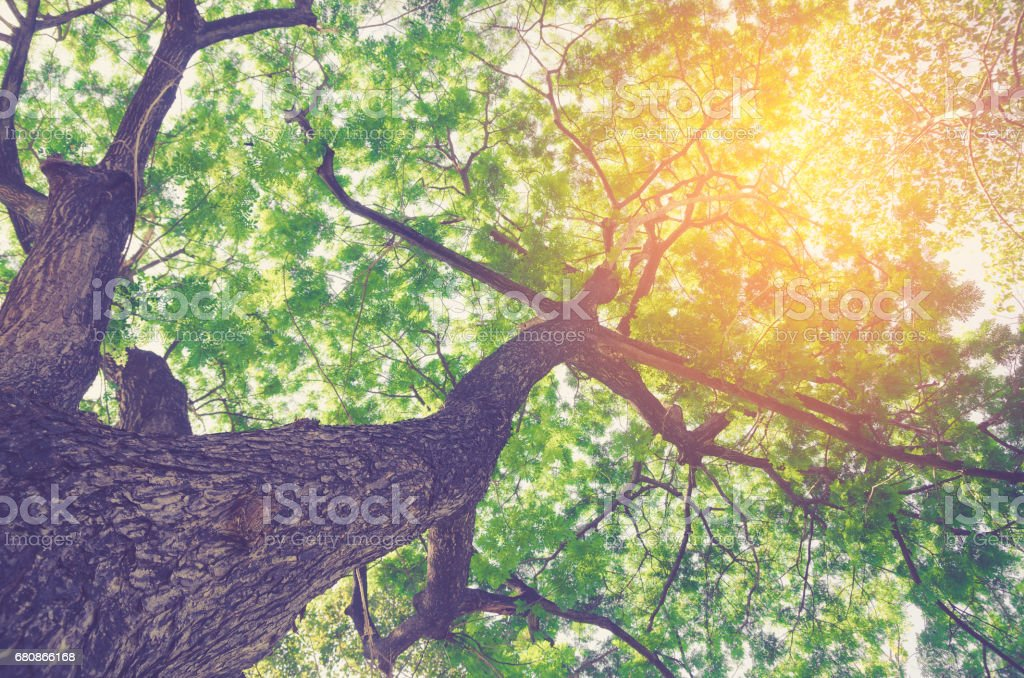 Forest with sunlight. The sun rays through branches of trees royalty-free stock photo