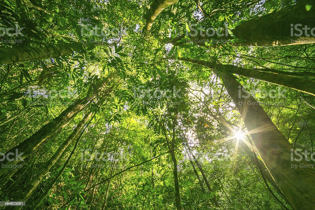 Forest with the sun behind stock photo