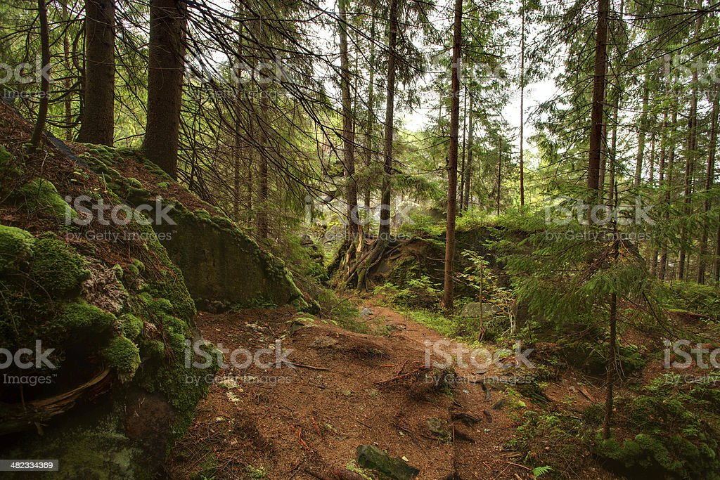 forest with trees and grass. Carpathian mountains stock photo