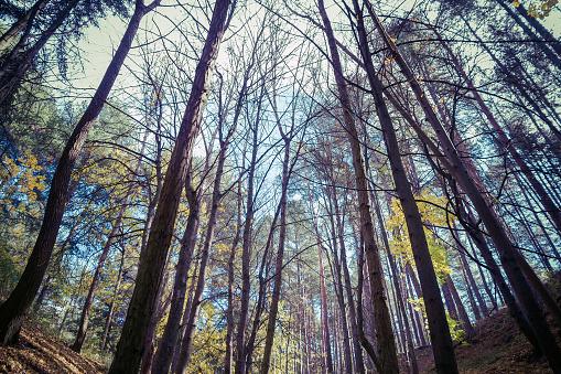 Forest with Trees in Autumn - Bosque con Arboles  Otoño