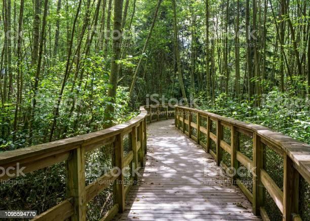 Photo of Forest wood boardwalk through trees Seattle, Washington