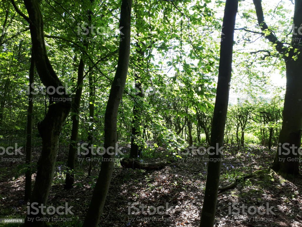 Wald-Wald im Frühling - Lizenzfrei Baum Stock-Foto