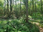 Landscape of forest woodland