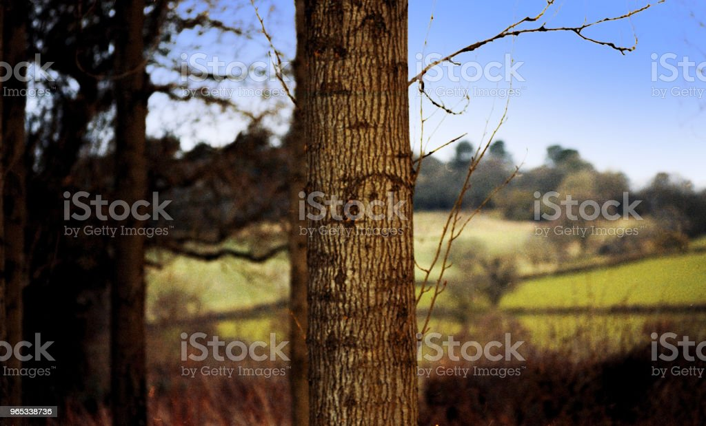 forest woodland trees countryside rural generic zbiór zdjęć royalty-free