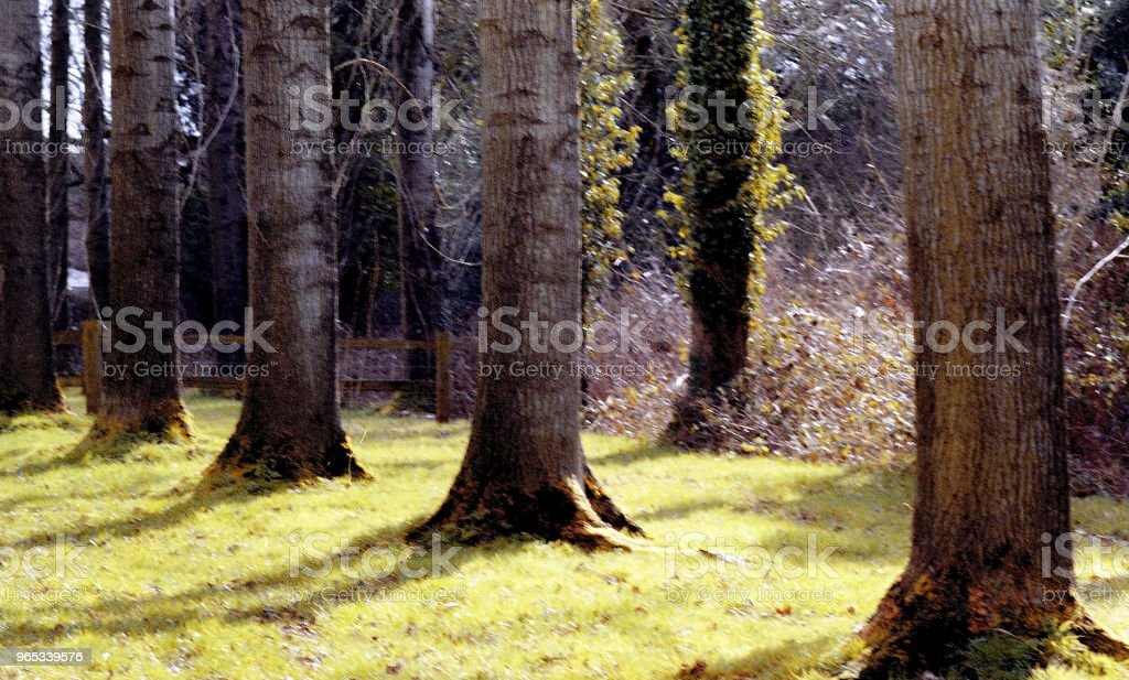 숲 숲 나무 시골 농촌 일반 - 로열티 프리 0명 스톡 사진