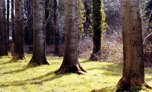 숲 숲 나무 시골 농촌 일반 0명에 대한 스톡 사진 및 기타 이미지