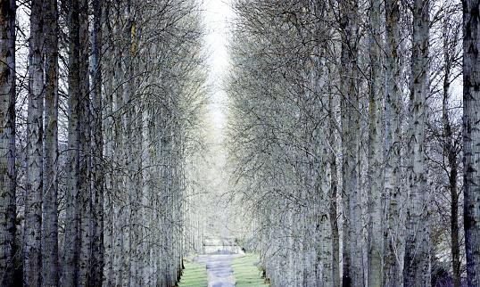 Forest Woodland Trees Countryside Rural Generic - zdjęcia stockowe i więcej obrazów Bez ludzi