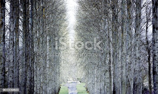Forest Woodland Trees Countryside Rural Generic Stock Photo & More Pictures of Agricultural Field