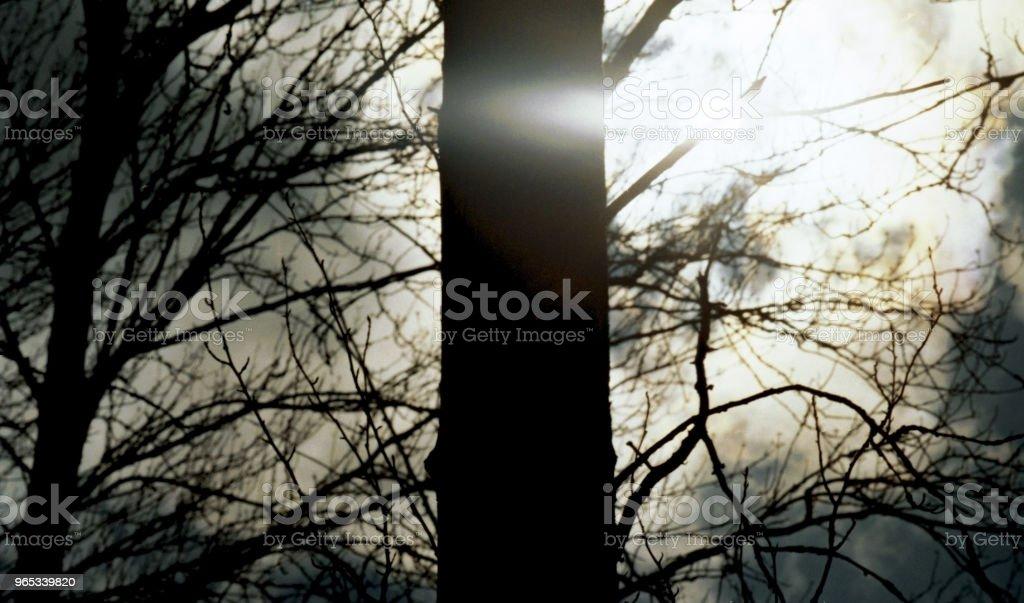 森林林地樹木農村通用 - 免版稅地勢景觀圖庫照片