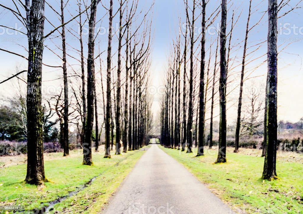 forest woodland trees countryside rural generic royalty-free stock photo