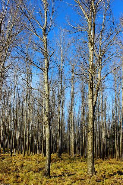 Forestación ストックフォト