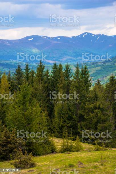 Photo of forested hills of Carpathians in spring