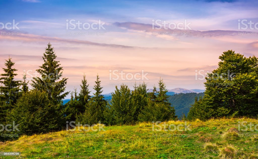 forested hills over the Brustury valley at dusk - Royalty-free At The Edge Of Stock Photo