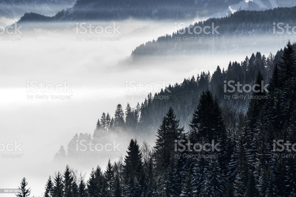 Forested mountain slope in low lying valley fog with silhouettes of evergreen conifers shrouded in mist. Scenic snowy winter landscape in Alps, Bavaria, Germany. stock photo