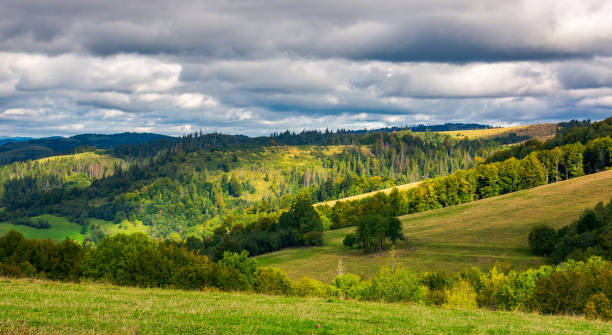 forested rolling hill on overcast day stock photo