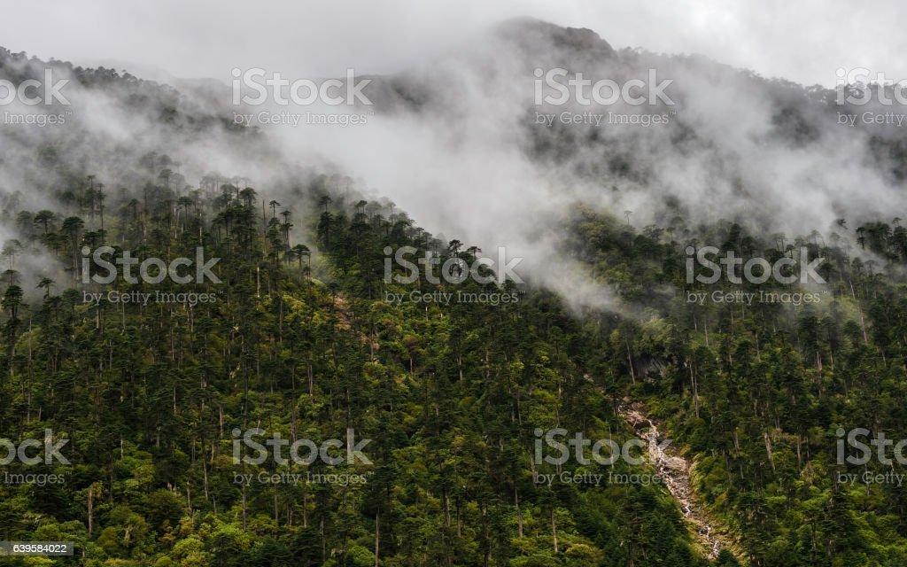 Forested slopes of Himalayas, Dirang, Arunachal Pradesh, India. stock photo