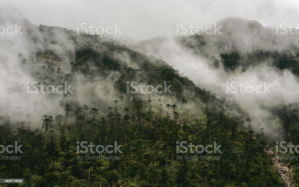 Forested slopes of Himalays, Dirang, Arunachal Pradesh, India. stock photo