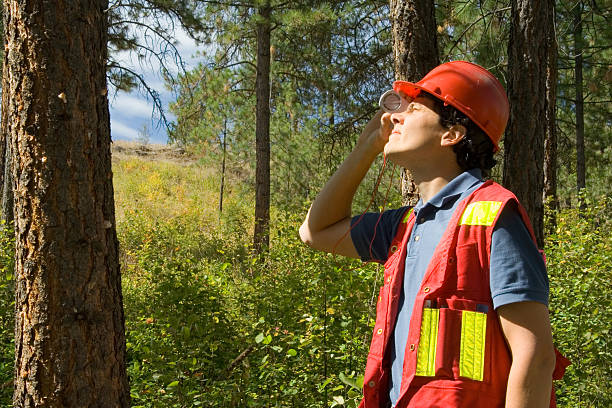 Forester / Arborist A forester assessing the height of a tree with a clinometer.  The tree to the left is attacked by mountain pine beetle (notice pitch coming out of attack holes) forester stock pictures, royalty-free photos & images