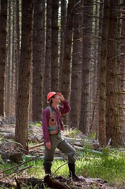 Forester in a Pacific Northwest forest Forester standing among Douglas fir trees in the Pacific Northwest forester stock pictures, royalty-free photos & images