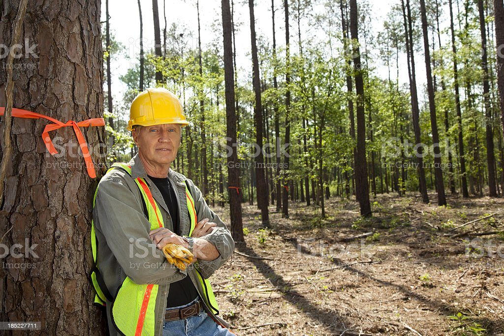Forester or builder marking trees with orange ribbon. stock photo