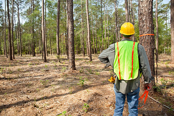 Forester or builder marking trees with orange ribbon. Forester marking trees with orange ribbon.  Safety hat and vest.  He is relaxing and envisioning what he will build.  MORE LIKE THIS... in lightboxes below. forester stock pictures, royalty-free photos & images