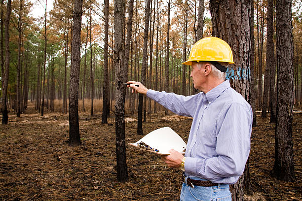 Forester, surveyor, environmentalist man. Hardhat, studying environmental conservation, burned forest Forester or surveyor mature man in pine thicket forest that has had the undergrowth burned.  Focus is on the clipboard.  Studying effects of enviornmental conservation.   MORE LIKE THIS... in lightboxes below. forester stock pictures, royalty-free photos & images