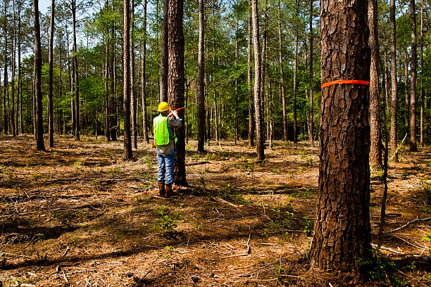 Forester, surveyor or builder marking trees with orange ribbon Forester, surveyor or builder marking trees with orange ribbon.  Safety hat and vest.  MORE LIKE THIS... in lightboxes below. forester stock pictures, royalty-free photos & images