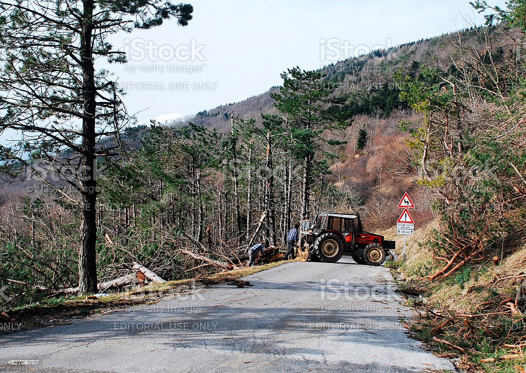 Foresters Clearing Rime Damaged Trees royalty-free stock photo
