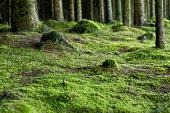 istock Forestfloor 173804453