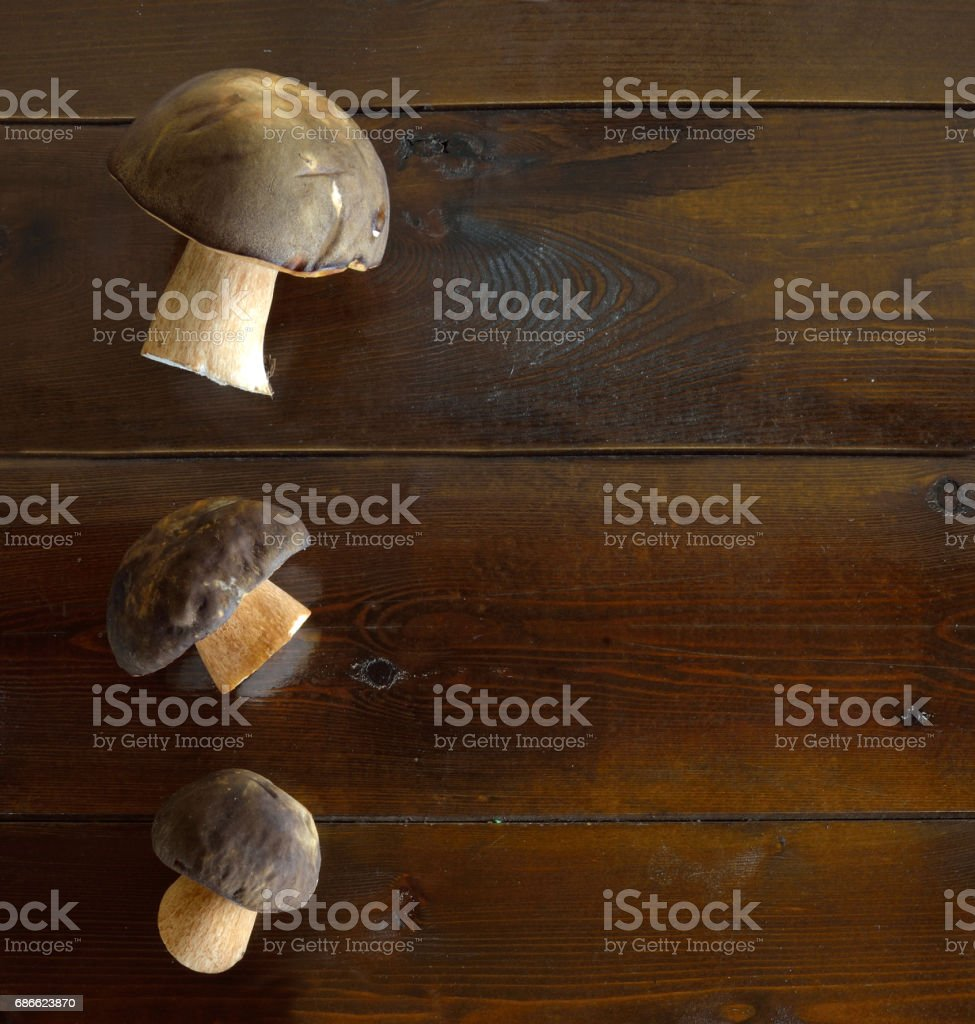 Forest-picked mushrooms 免版稅 stock photo