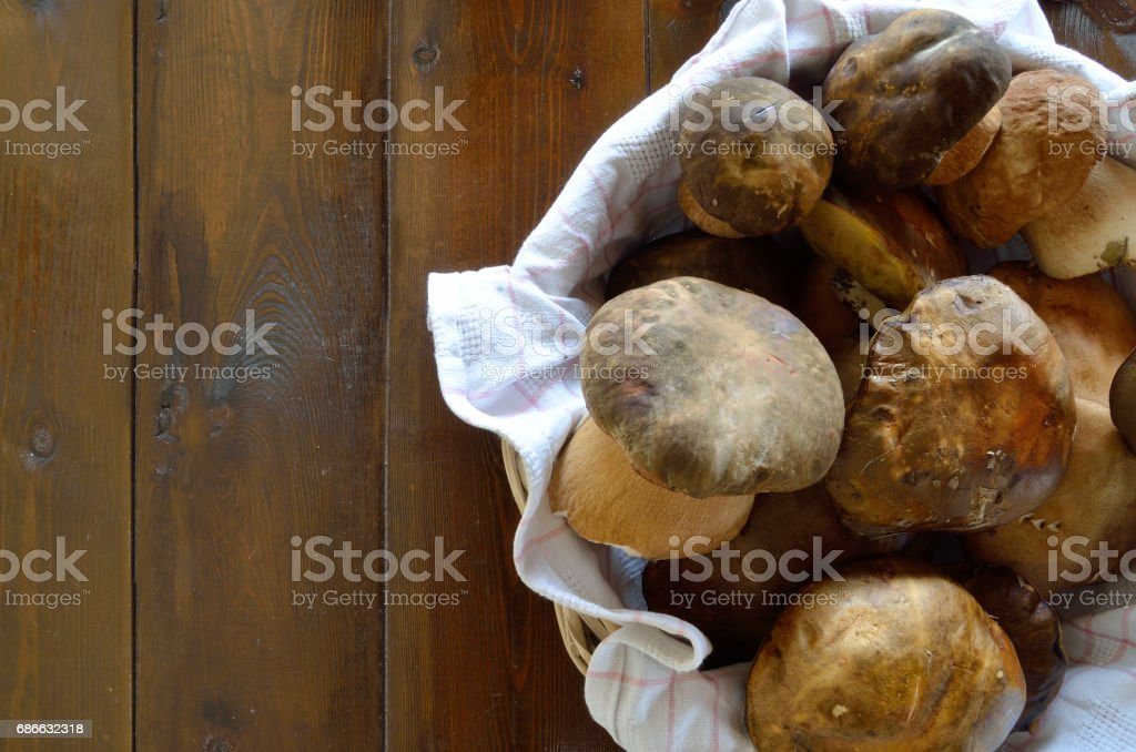 Forest-picked mushrooms royalty-free stock photo