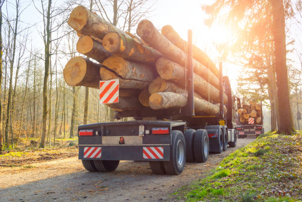 Forestry activity: transport of tree trunks stock photo