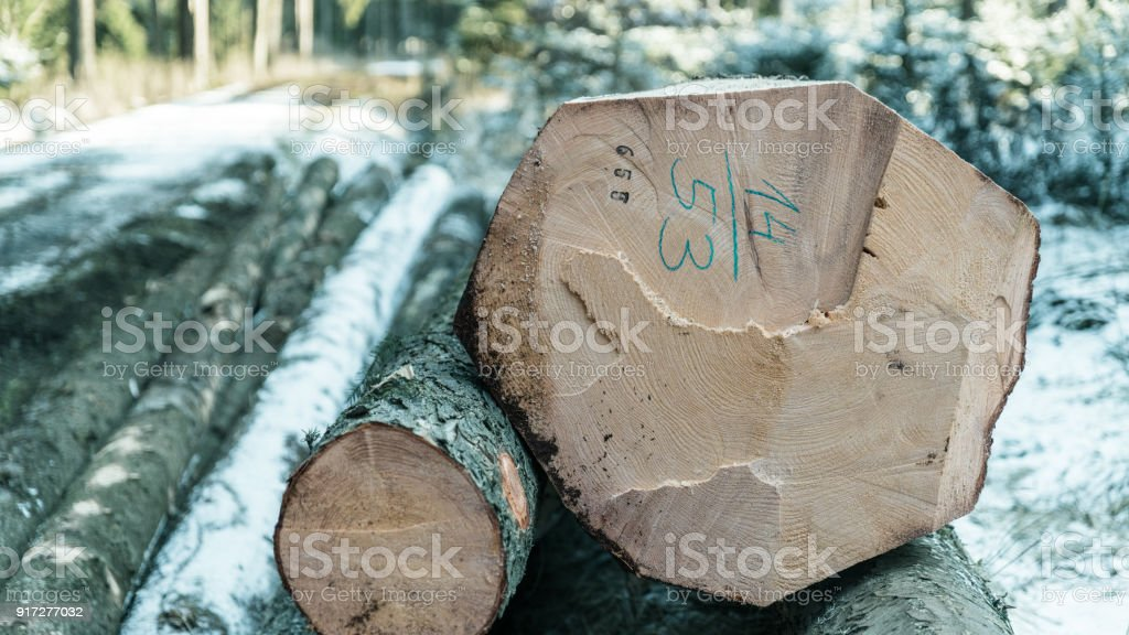 Forestry and logging in artistic detail stock photo