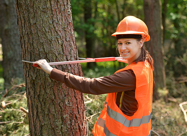 forestry engineer Young and beautiful forestry engineer at workYoung and beautiful forestry engineer at work forester stock pictures, royalty-free photos & images
