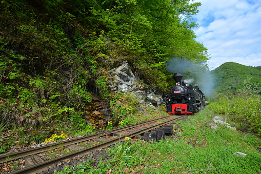 Mocanita Steam Train build in 1932 for timber transport, now used more for tourists.