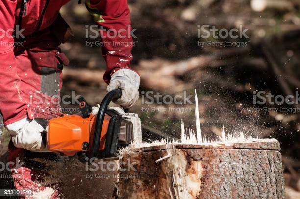 Forestry worker cutting the stump of a spruce tree with chainsaw picture id933101246?b=1&k=6&m=933101246&s=612x612&h=2dkaml08ohi0fgx77nfcfxj3tbuk6qj72aihk1iy2dc=