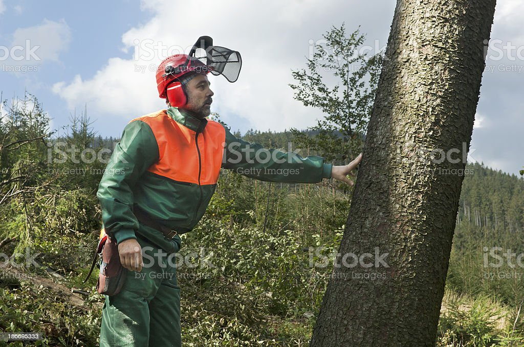Forestry worker felling tree royalty-free stock photo