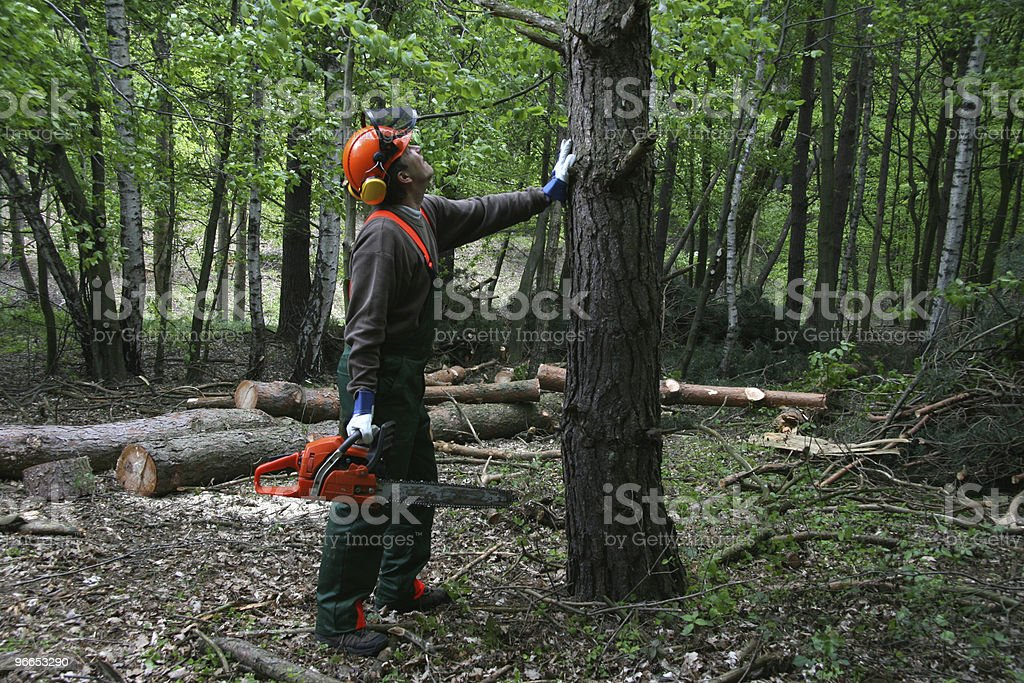 forestry worker royalty-free stock photo