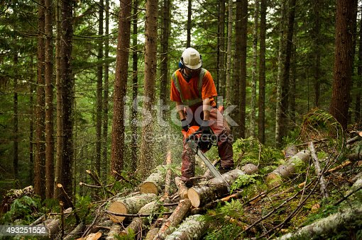 Forestry worker othinning a forest to prevent large forest fires. Proactive brush and tree thinning and controlled burns can help reduce the risk of large forest fires.