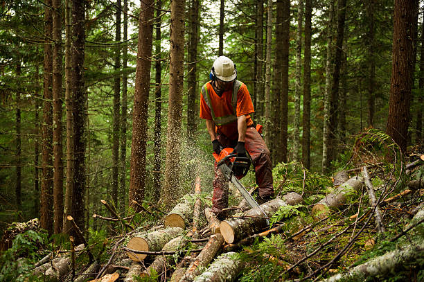 Forestry worker thinning a forest to prevent large forest fires Forestry worker othinning a forest to prevent large forest fires. Proactive brush and tree thinning and controlled burns can help reduce the risk of large forest fires. smoke jumper stock pictures, royalty-free photos & images