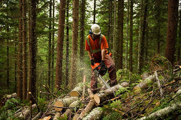 silvicoltura operaio thinning una foresta a prevenire grandi incendi - industria forestale foto e immagini stock