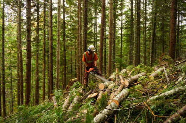 forestry worker thinning trees to prevent large forest fires - industria forestale foto e immagini stock
