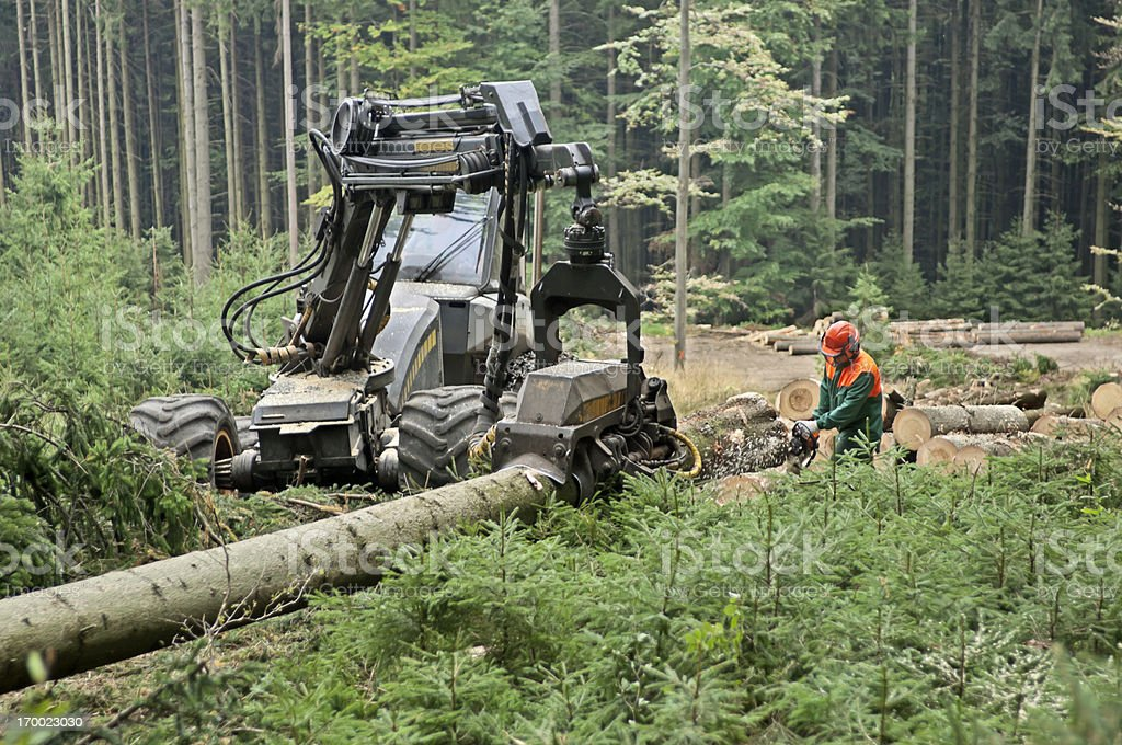 Forestry worker with chainsaw royalty-free stock photo