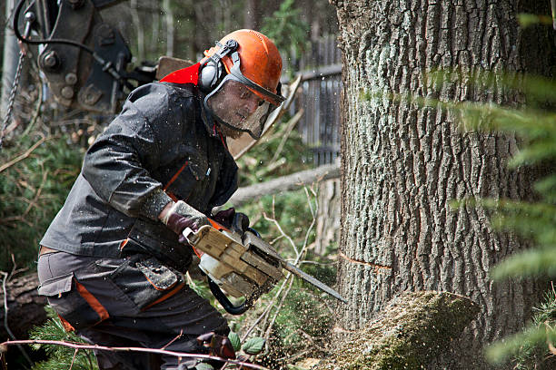 Forestry worker with chainsaw Forestry worker - lumberjack works with chainsaw. He cuts a big  tree in forest. Lumberjack has protective clothes. Shooting with the Canon EOS 5D Mark II. lumberjack stock pictures, royalty-free photos & images