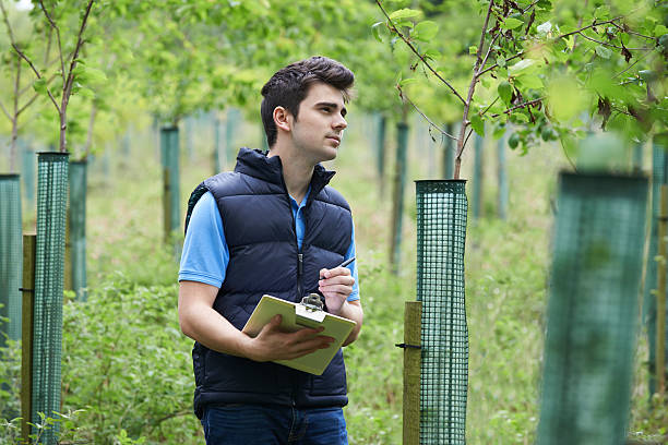 forestry worker with clipboard checking young trees - tree surgeon stock photos and pictures