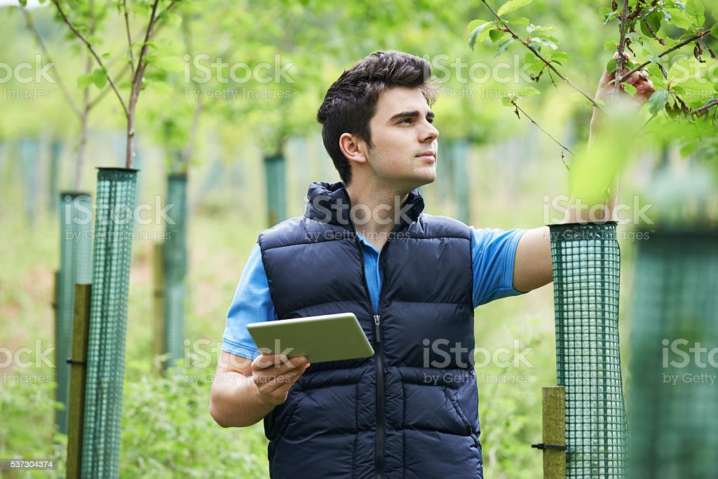 Forestry Worker With Digital Tablet Checking Young Trees stock photo