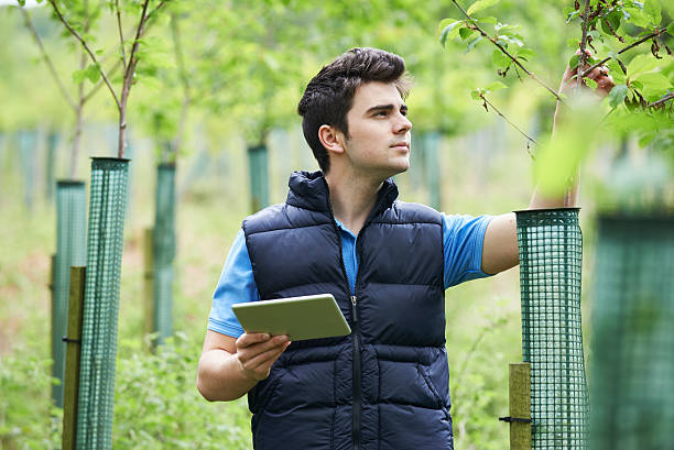 forestry worker with digital tablet checking young trees - tree surgeon stock photos and pictures