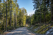 Forests of fir and beech trees and mountain paths at autumn, highlands near Arnoldstein, Österreich.