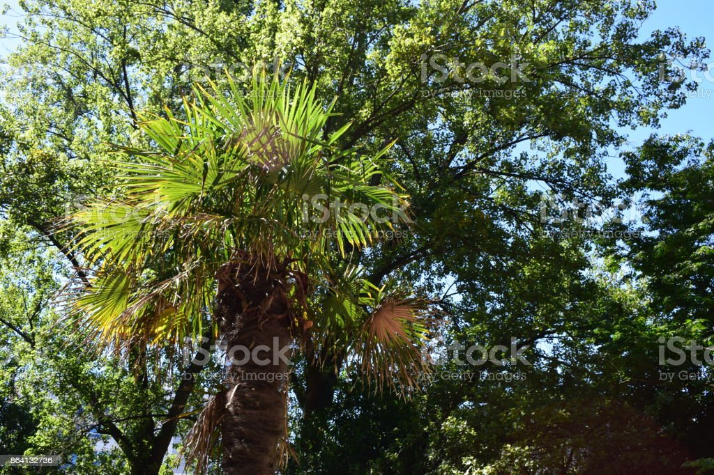 Forests in parks. royalty-free stock photo